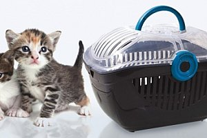 Plastová přepravka Magic Cat Carrier